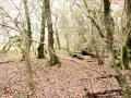 Gowerton Walk