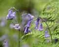 Llethryd in Flower