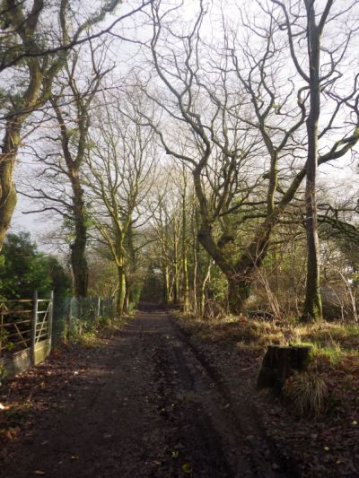 Photograph of Walking Route - Image 37