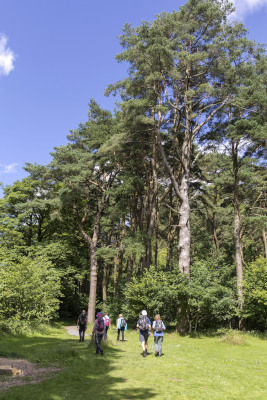 Photograph of Walking Route - Image 65